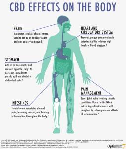 CBD Effects on the Body
