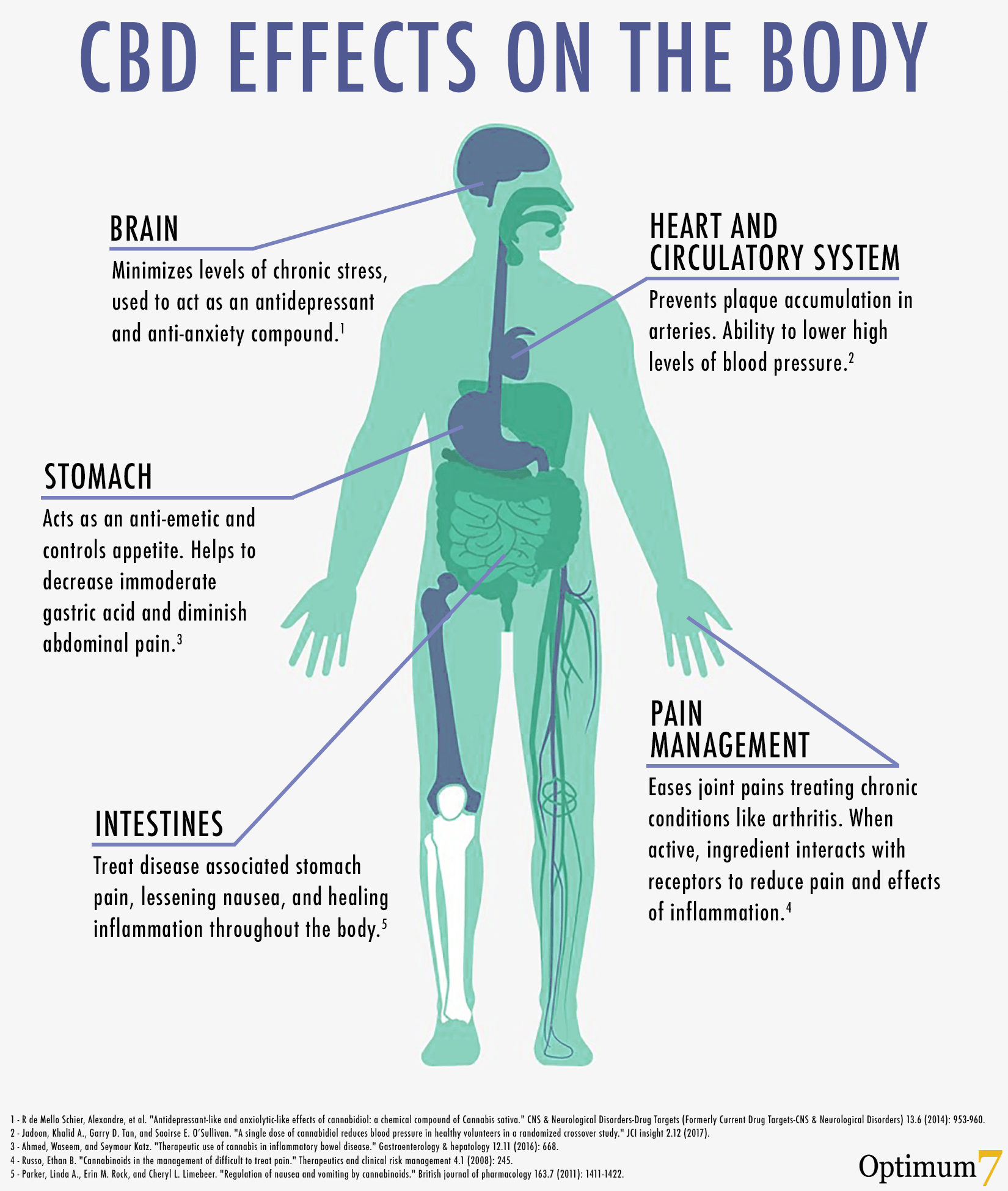 CBD Oil Effects on the Body