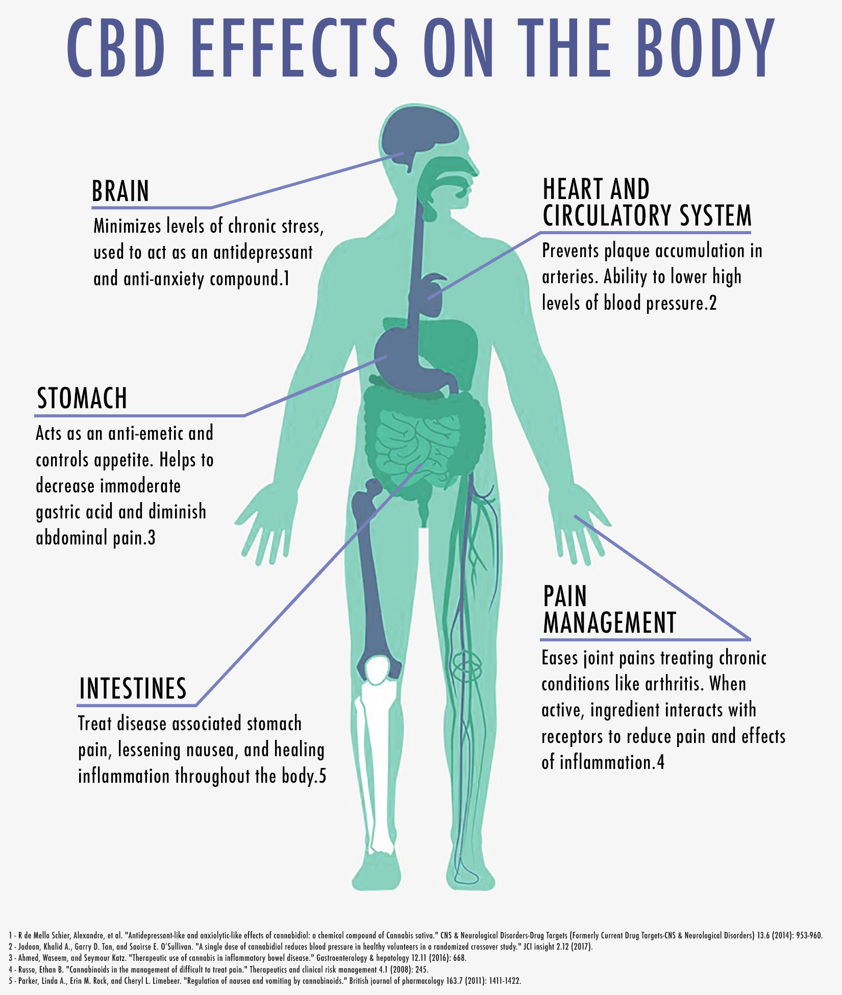 CBD Effects on the Body